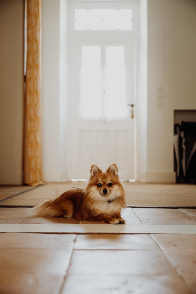 préparatifs de la mariée avec chien en déco